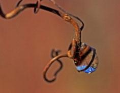 Claudie eau live macrophotographies sublimes