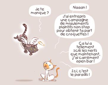 PrincessH cats afterlife chats après la mort